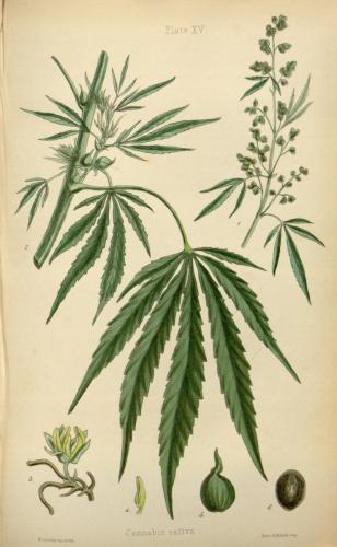 cbdsuisse-cbd-cannabisculture-cbdlife-cannabismedicinal-swisscbd-cannabis-marijuana-weed-hemp-swisscannabis-cannabislegal-swissmade-medicalmarijuana-cbdhemp-cbdhanf-swisshemp-02
