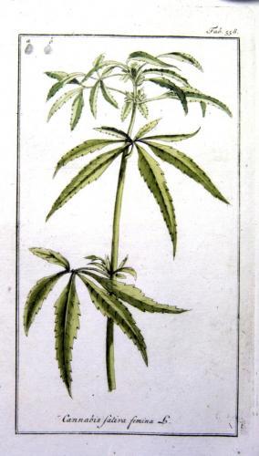 cbdsuisse-cbd-cannabisculture-cbdlife-cannabismedicinal-swisscbd-cannabis-marijuana-weed-hemp-swisscannabis-cannabislegal-swissmade-medicalmarijuana-cbdhemp-cbdhanf-swisshemp-16