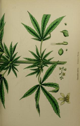 cbdsuisse-cbd-cannabisculture-cbdlife-cannabismedicinal-swisscbd-cannabis-marijuana-weed-hemp-swisscannabis-cannabislegal-swissmade-medicalmarijuana-cbdhemp-cbdhanf-swisshemp-18