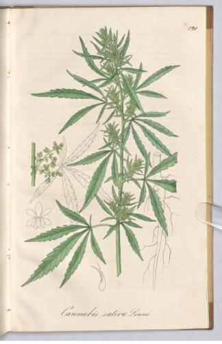 cbdsuisse-cbd-cannabisculture-cbdlife-cannabismedicinal-swisscbd-cannabis-marijuana-weed-hemp-swisscannabis-cannabislegal-swissmade-medicalmarijuana-cbdhemp-cbdhanf-swisshemp-30