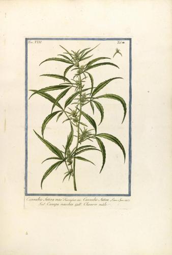 cbdsuisse-cbd-cannabisculture-cbdlife-cannabismedicinal-swisscbd-cannabis-marijuana-weed-hemp-swisscannabis-cannabislegal-swissmade-medicalmarijuana-cbdhemp-cbdhanf-swisshemp-35