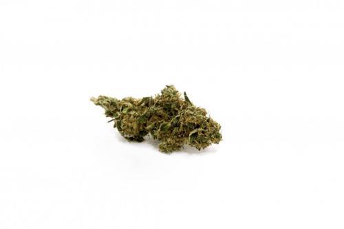 cbd-cannabis-vente-en-gros-grossistes-professionnelle-distributeurs-fournisseurs-importateurs-exportateurs-43