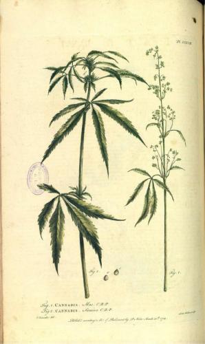 cbdsuisse-cbd-cannabisculture-cbdlife-cannabismedicinal-swisscbd-cannabis-marijuana-weed-hemp-swisscannabis-cannabislegal-swissmade-medicalmarijuana-cbdhemp-cbdhanf-swisshemp-32