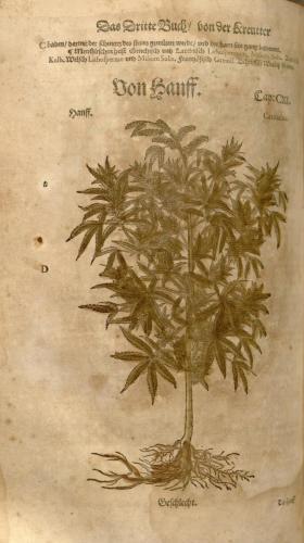 cbdsuisse-cbd-cannabisculture-cbdlife-cannabismedicinal-swisscbd-cannabis-marijuana-weed-hemp-swisscannabis-cannabislegal-swissmade-medicalmarijuana-cbdhemp-cbdhanf-swisshemp-40