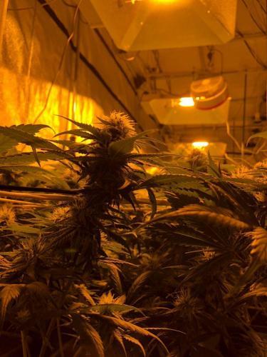 leriff-riff-Vente en Gros de CBD Suisse-Grossiste de cannabis légal-suisse-07