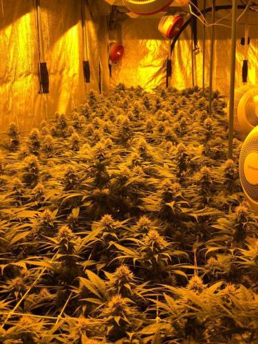 leriff-riff-Vente en Gros de CBD Suisse-Grossiste de cannabis légal-suisse-08