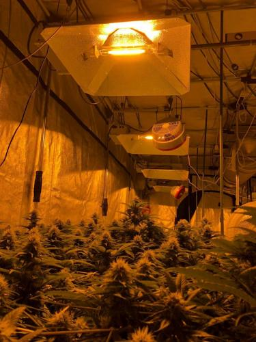 leriff-riff-Vente en Gros de CBD Suisse-Grossiste de cannabis légal-suisse-18