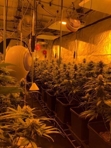 leriff-riff-Vente en Gros de CBD Suisse-Grossiste de cannabis légal-suisse-20