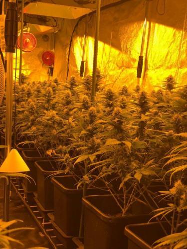 leriff-riff-Vente en Gros de CBD Suisse-Grossiste de cannabis légal-suisse-21